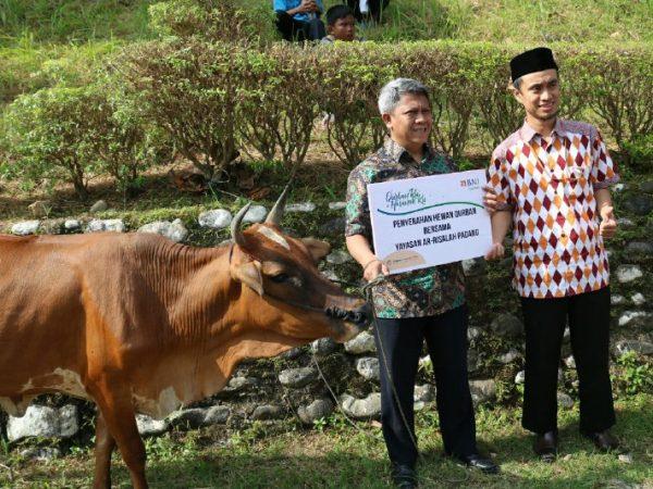 BNI Syariah cabang Padang salurkan 2 ekor sapi kurban melalui LAZ Ar Risalah
